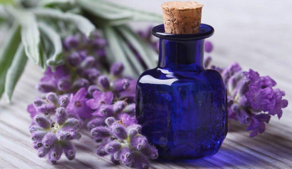 Lavantanın faydaları neledir? Lavanta yağı nerelerde kullanılır?