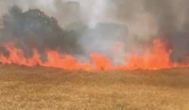 Silivri'de 6 dönümlük buğday tarlası yandı