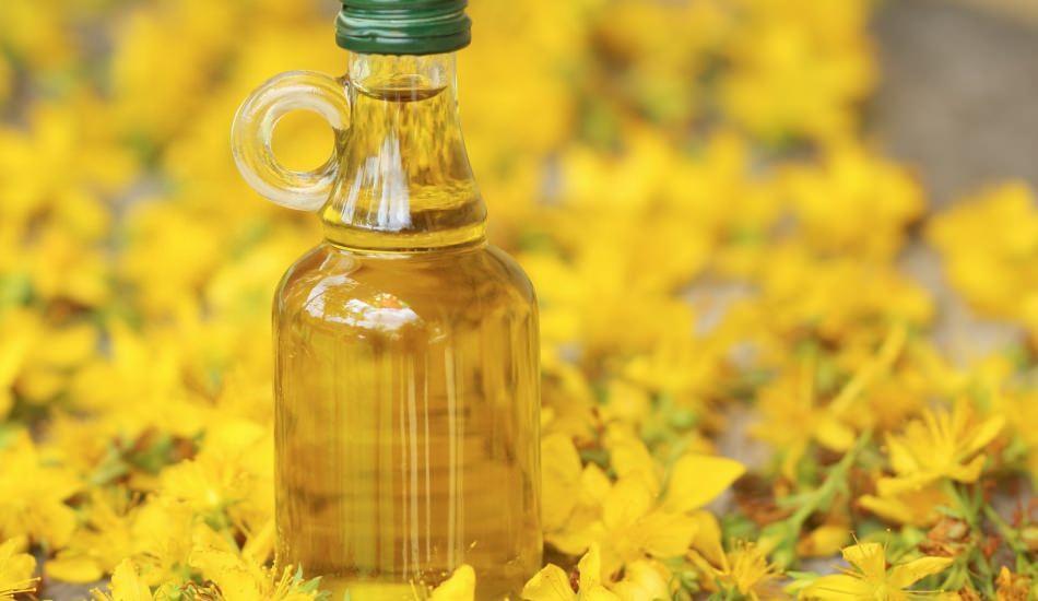 Kantaron çiçeğinin faydaları nelerdir? Kantaron yağı ne işe yarar?