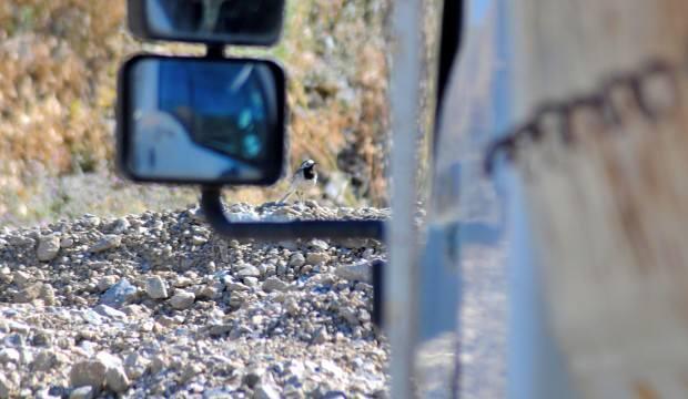 Kuşun yuva yaptığı kamyon seferden çekildi
