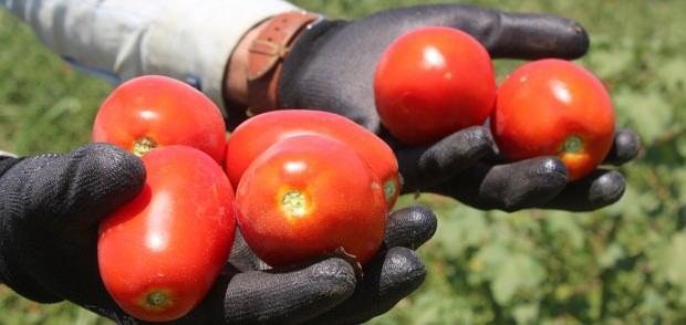 domatesin faydaları nelerdir