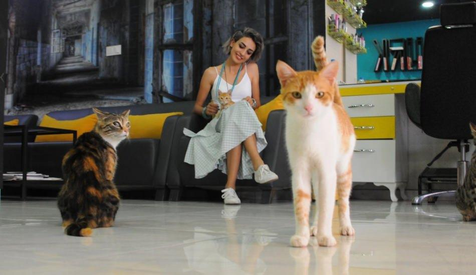 İzmit'te bir kuaförün çırağı 15 tane kedi!