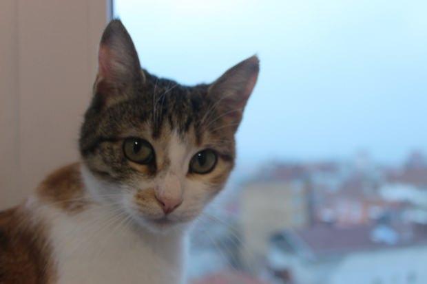 """""""9 bin yıllık yolculuklarından sonra kediler dünyayı fethettiler. Artık huzurla dinlenebilirler..."""""""