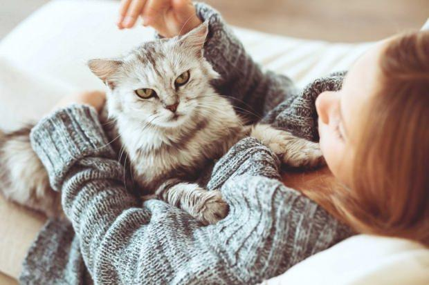 evde kedi besleyenler için temizlik malzemeleri