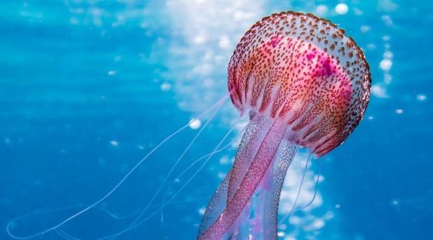 denizanası hakkında bilinmesi gerekenler