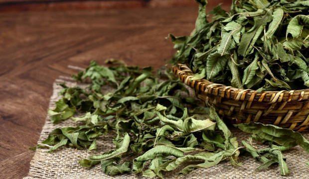 melisa otu çayı nasıl yapılır
