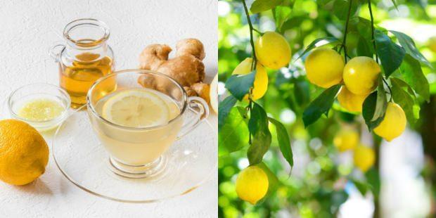 limon ile zayıflama yöntemi