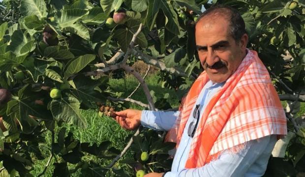 Lezzet deposu taze siyah incirin ihracat yolculuğu başladı