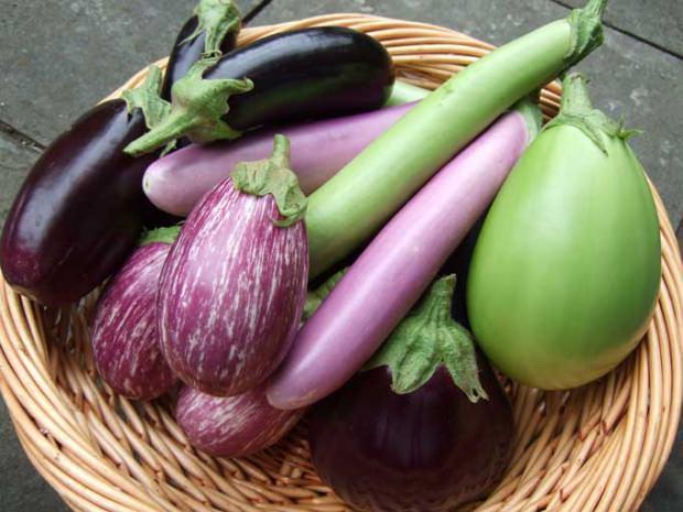 patlıcan saplarının faydaları
