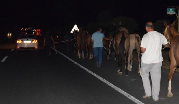 Çiftlikten kaçan 50 yarış atı ortalığı birbirine kattı