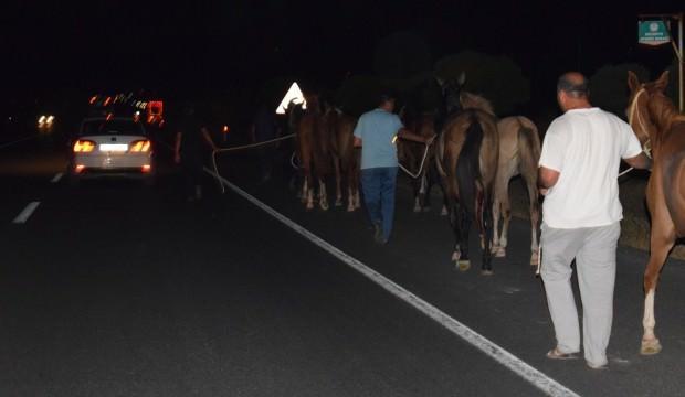 Çiftlikten kaçan yarış atları trafiği birbirine kattı