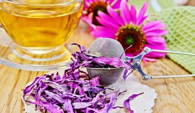 ekinezya çayı nasıl yapılır