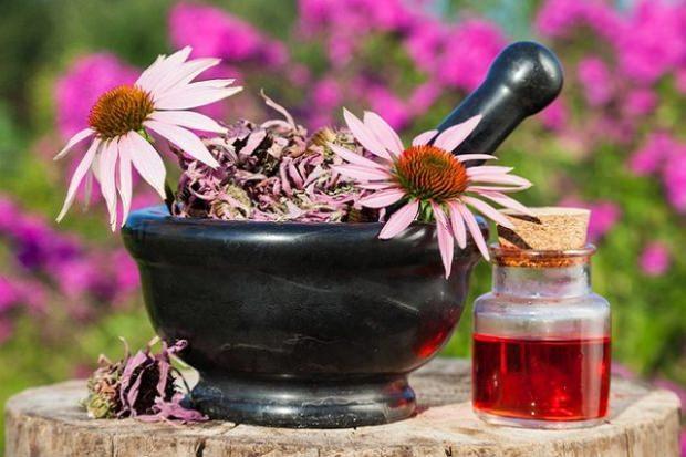 ekinezya bitkisinin cilde faydası