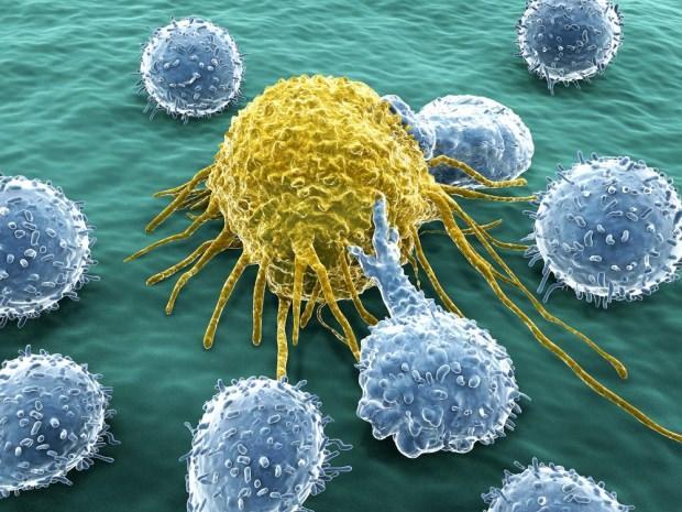 Bağışıklık sisteminin yetmezliğini tetikleyen enfeksiyonlar