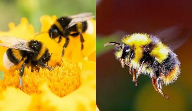 Rüyada arı görmek iyiye mi işaret eder |Rüyada arı hayra mı alamettir?