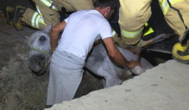 Su kanalına düşen atı itfaiye kurtardı