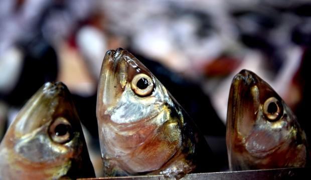 Büyük tehlike! Balık sezonu kasımda kapanabilir