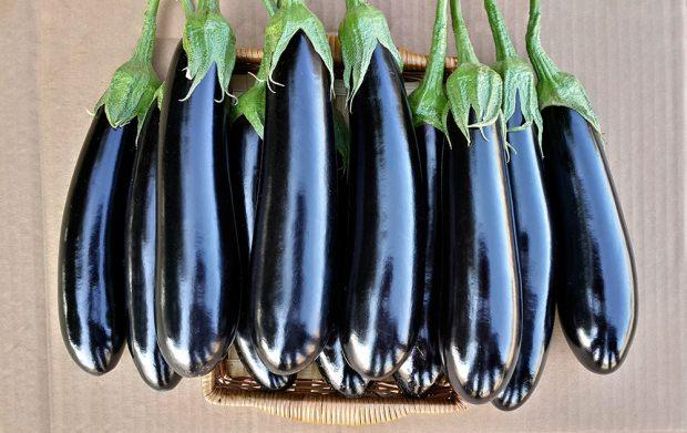 patlıcan sapının faydaları