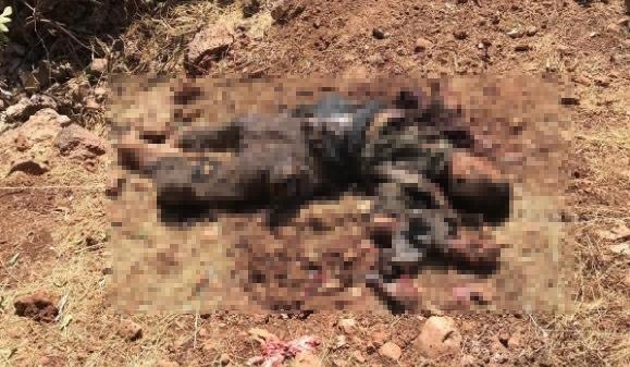 MARDİN'DE ÖLDÜRÜLEN PKK'LILAR