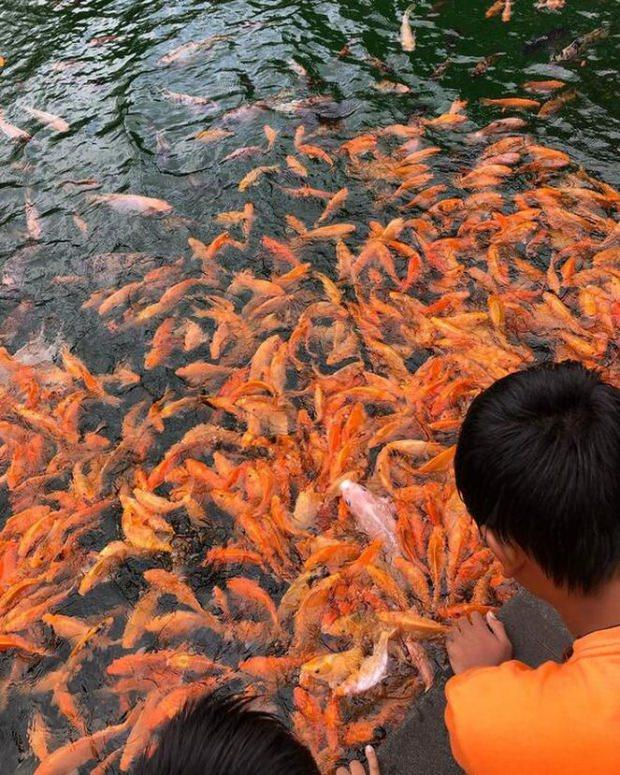 Kıvanç Tatlıtuğ ve Başak Dizer Bali'de