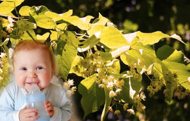 bebekler için ıhlamur çayı tarifi