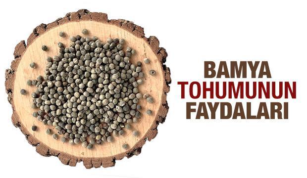 Bamya tohumunun faydaları: Bamya tohumu hangi hastalıklara iyi gelir?