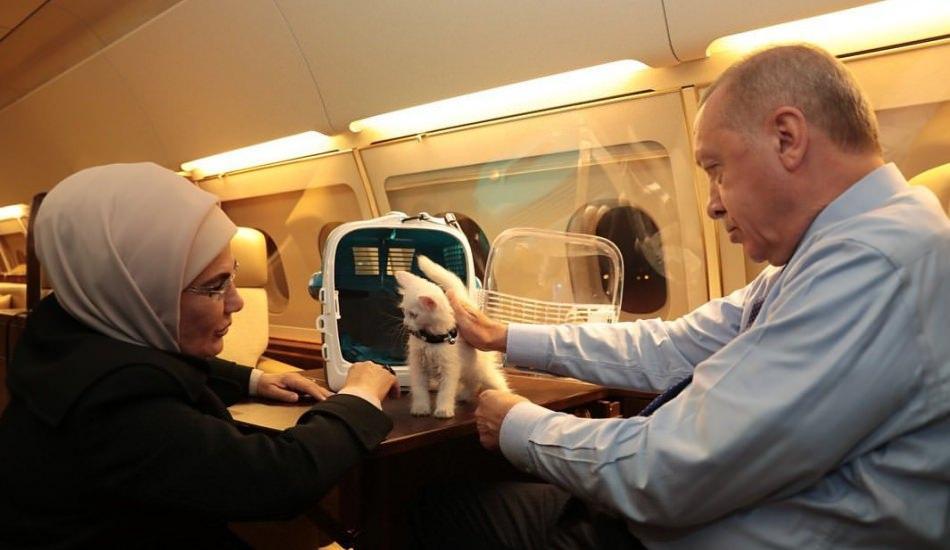 Emine Erdoğan'dan 4 Ekim Hayvanları Koruma Günü mesajı