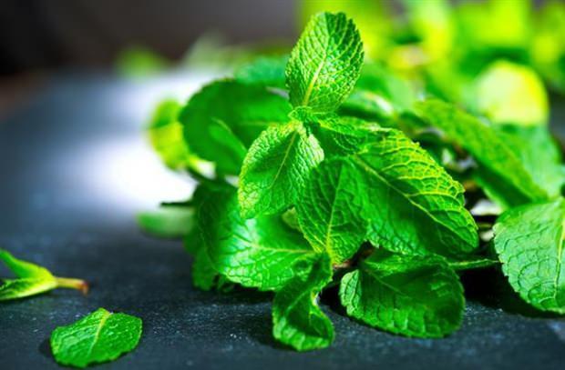 nane yaprağı çayı nasıl hazırlanır
