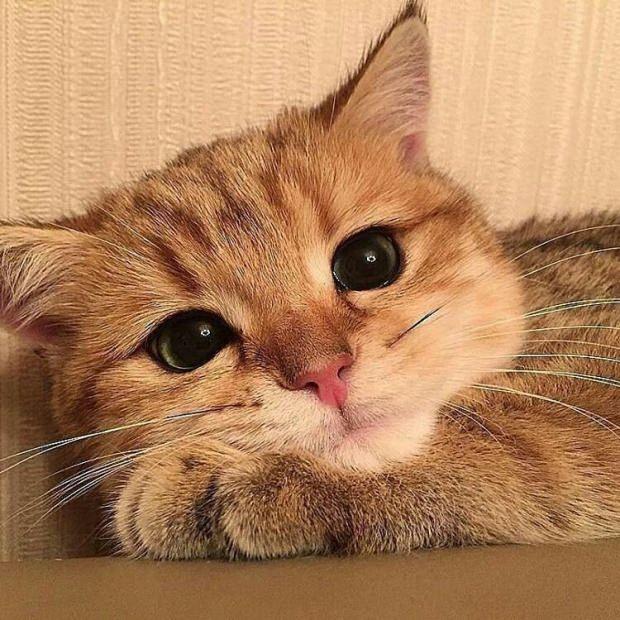 Kedi tüyünün dökülmesi nasıl önlenir?