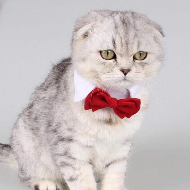 Kedi pire tasması