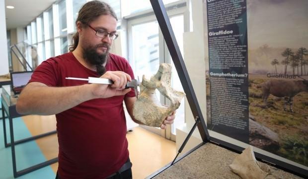 Kayseri'deki fosiller yeni bir türe ait olabilir