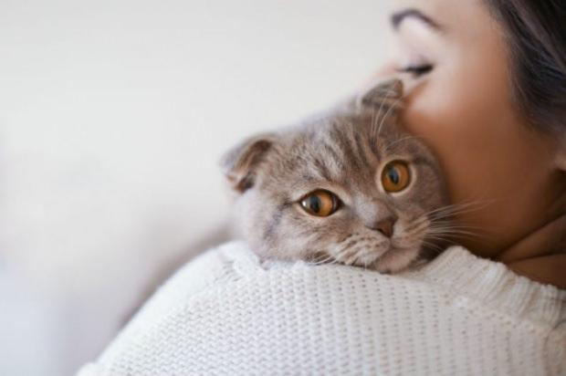Kedilerin stresi nasıl önlenir?