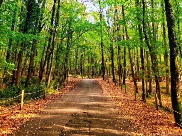 Belgrad Ormanı hakkında bilgi