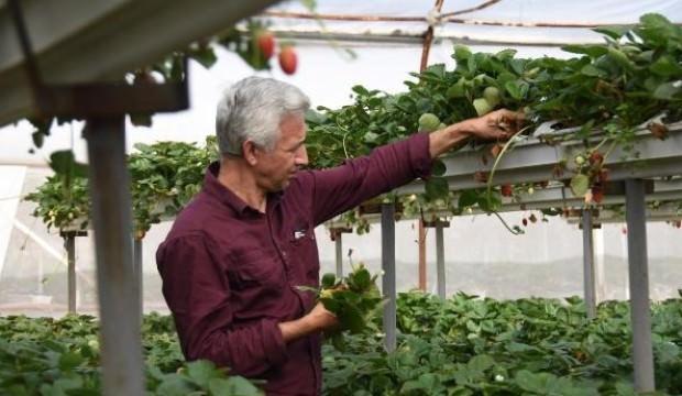 Kuaförlüğü bıraktı, topraksız tarımla çilek üretiyor