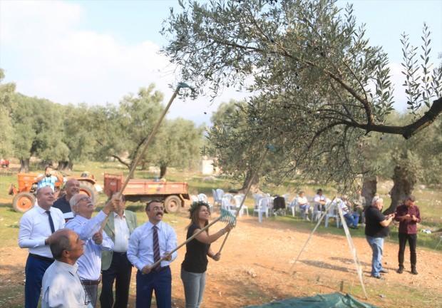 Muğla'nın Milas ilçesinde yaklaşık 3 bin yıllık olduğu belirtilen anıt ağaçtan elde edilen zeytinyağının litresi 100 bin liradan açık artırmaya sunulacak.