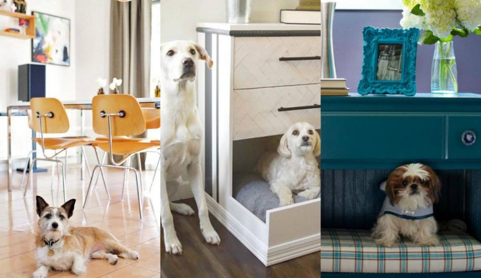 Evcil hayvanlarınız için ev dekorasyonu önerileri