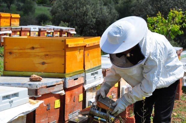arı zehrinin faydaları