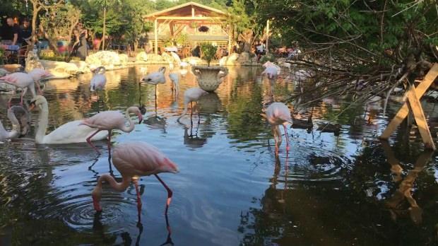 Flamingoköy'e nasıl gidilir?