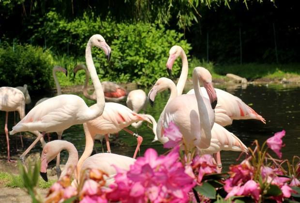 Flamingoköy'de ne yapılır?