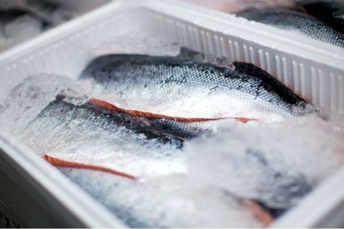 Buzdolabında balık saklama yöntemi