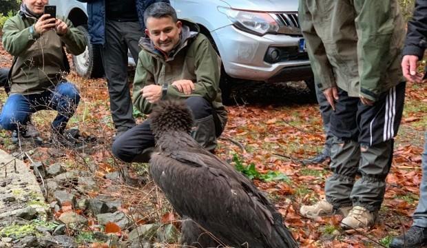 Bakan Pakdemirli, Kara Akbaba'yı doğaya saldı