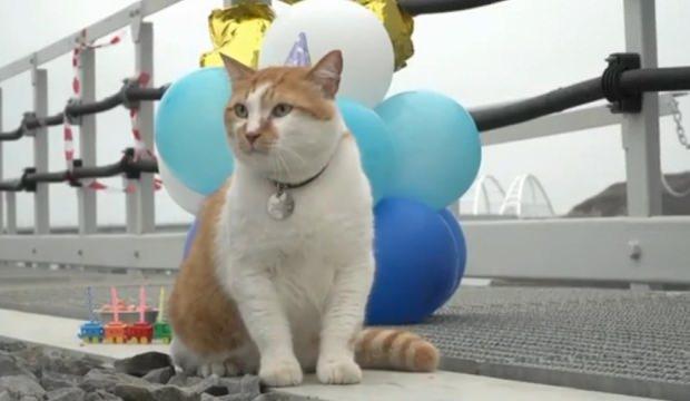 Kerç Boğazı Köprüsü'nün maskotu kediye doğum günü partisi düzenlendi