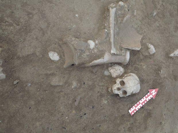 Çorum'da bulunan Hitit İmparatorluğu'na başkentlik yapan en önemli askeri ve dini merkezlerinden birisi olan Şapinuva'da Hitit dönemine ait olduğu düşünülen insan kafatası ve uyluk kemiği bulundu. | Sungurlu Haber