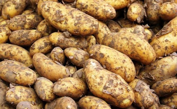patates suyu ne işe yarar