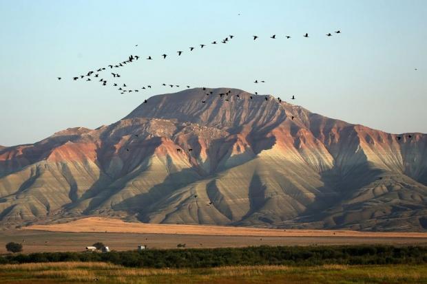 Nallıhan Kuş Cenneti göçmen kuşların en renkli istasyonu - Gezi Rehberi  Haberleri