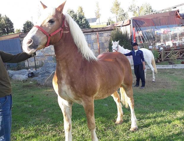 Köyüm At Çiftliği- Bayrampaşa