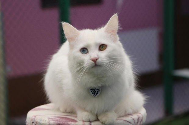 Mozart dinleyince sakinleşen kediler