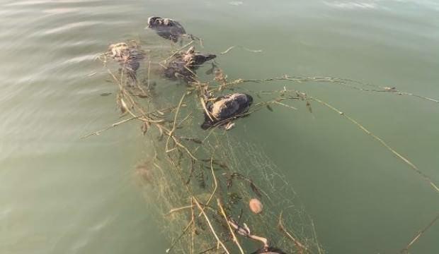 Sakarya Gölü'nde şoke eden görüntü!
