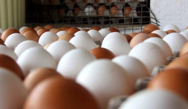 Kümes hayvancılığı üretim verileri açıklandı