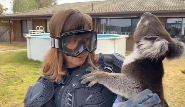 Sunucuya koalayı 'vahşi ayı' diye 'yutturdular'